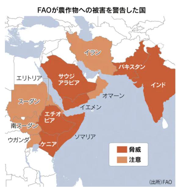 バッタ大量発生日本に来る